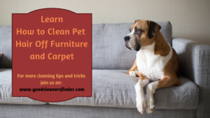 How to Clean Pet Hair Off Furniture and Carpet